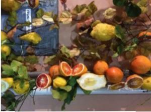 Sicily photo ~ citrus