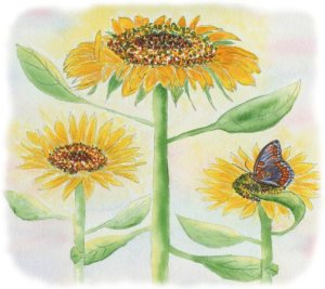 Grateful sunflowers